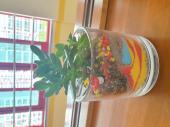 4학년 교육기부 수업- 공기정화식물 테라리윰